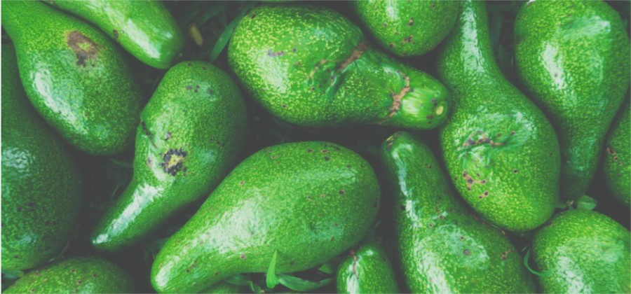 Avocado is rich in lysine